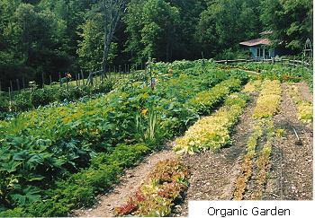 """<a href=""""/content/organic-garden"""">Organic Garden</a>"""