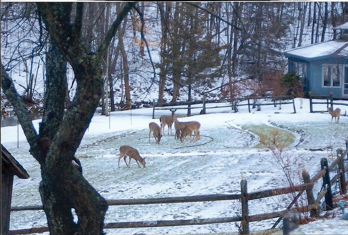 """<a href=""""/content/deer"""">Deer</a>"""