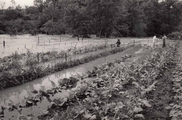 """<a href=""""/content/garden-flood-early-years"""">Garden flood early years</a>"""